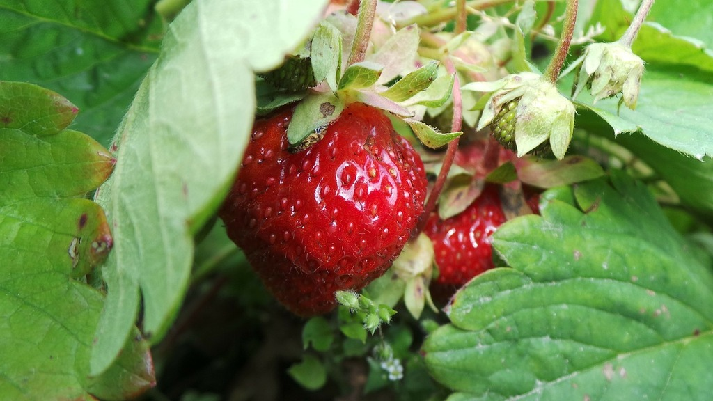Berry in the summer of red, nature landscapes.