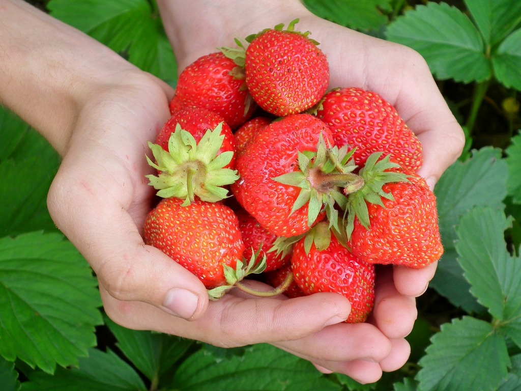 Berry strawberry hands, food drink.