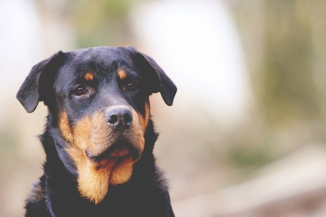 Best friend dog, animals.