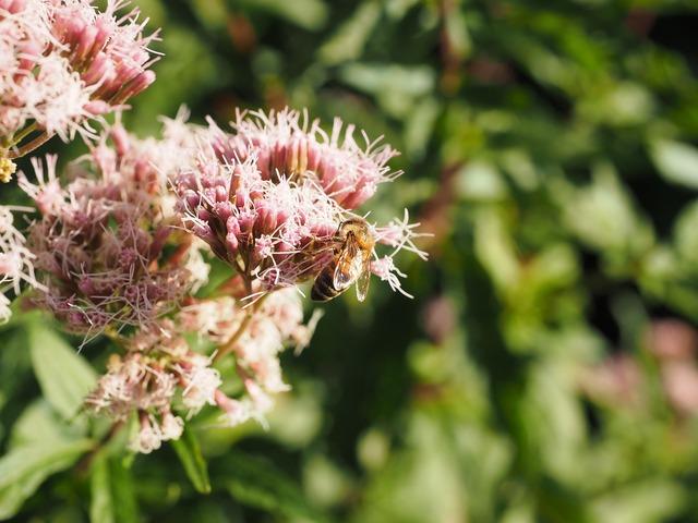 Big fat hen bee pollination, nature landscapes.