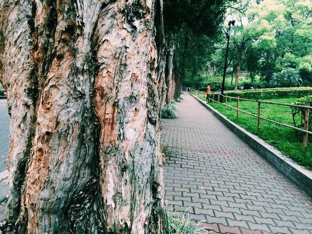 Big trees park views.