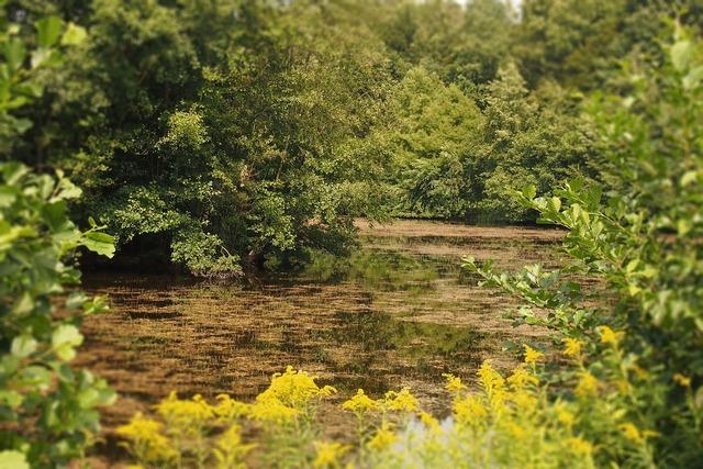 Biotope environment lake.