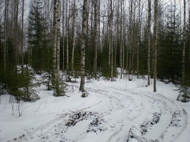 Birch forest crust, nature landscapes.