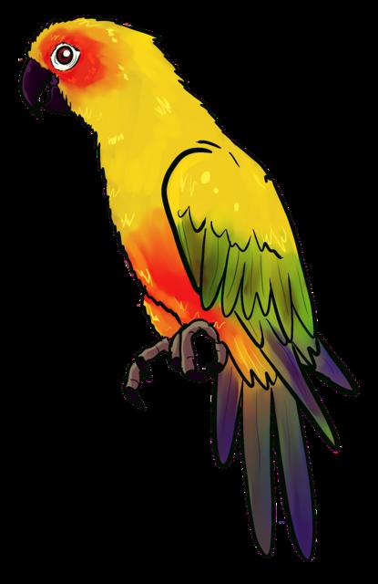Bird animal birds, animals.