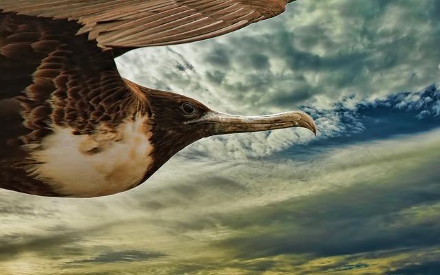 Bird flying animal, animals.