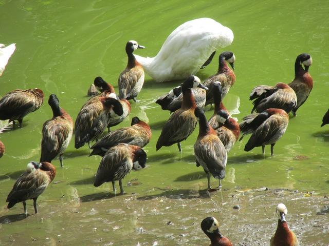 Bird lake tropical birds, animals.