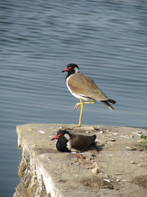 Bird one leg lake, animals.