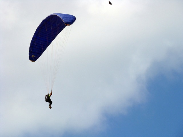 Bird parachuting parachute, animals.
