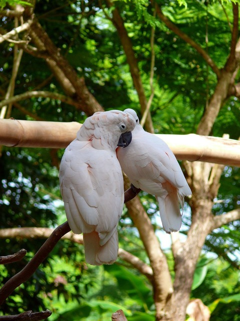 Birds cockatoo zoo.