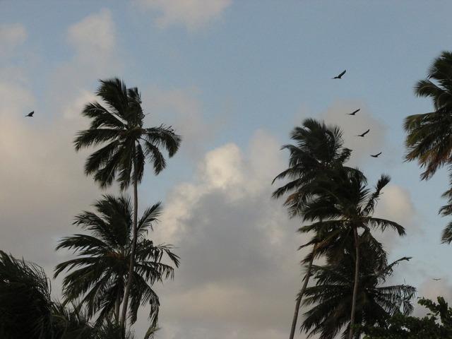 Birds coconut trees beach, travel vacation.