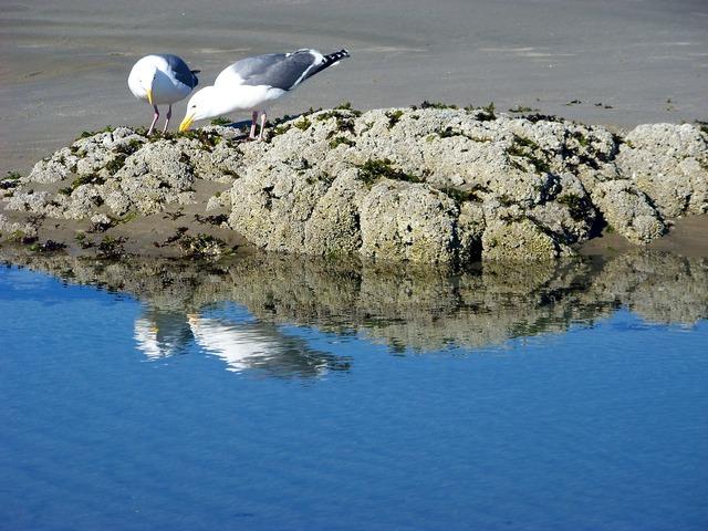 Birds gulls seagulls, travel vacation.