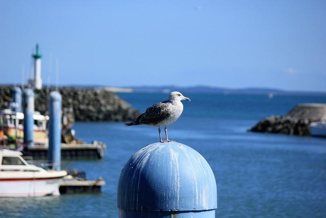 Birds island of oleron sea.