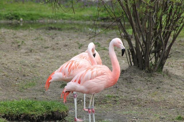 Birds pink flamingo exotic.