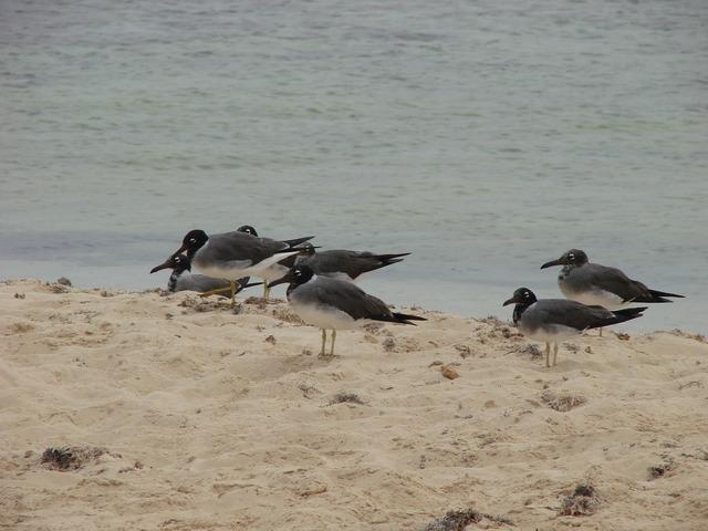 Birds sand beach, travel vacation.