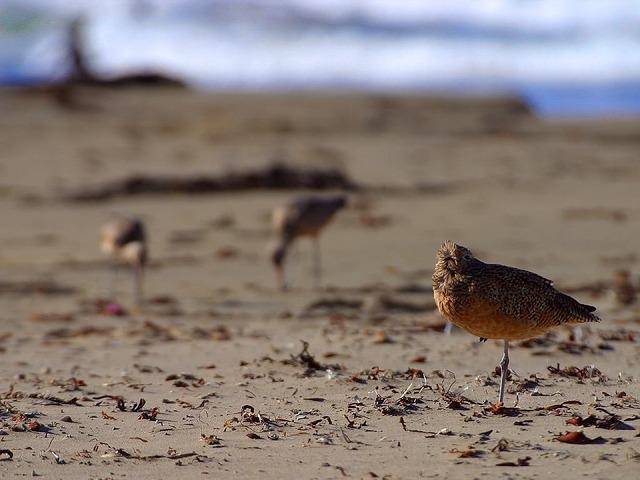 Birds stand on one leg beach, travel vacation.
