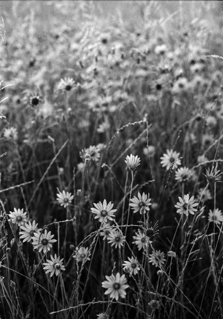 Black and white flowers white, nature landscapes.