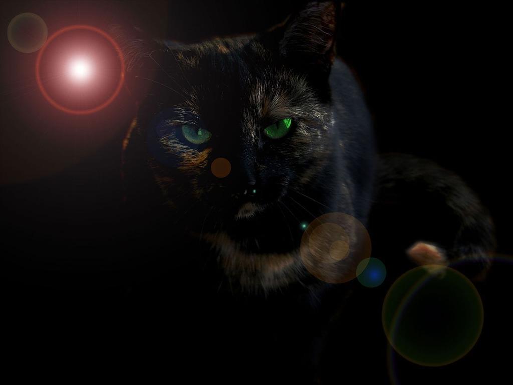 Black cat green, animals.