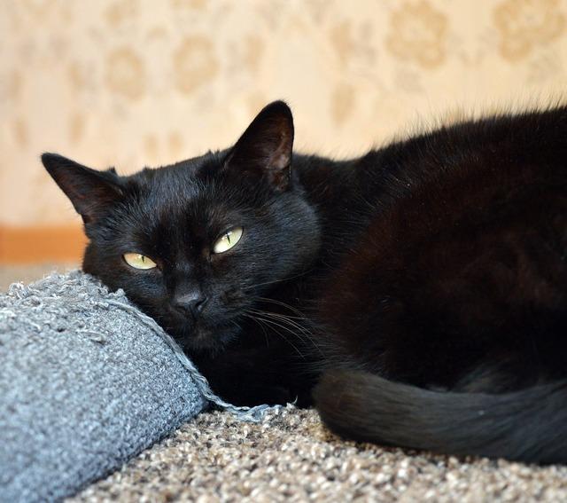 Black cat scratching posts cat looking, animals.
