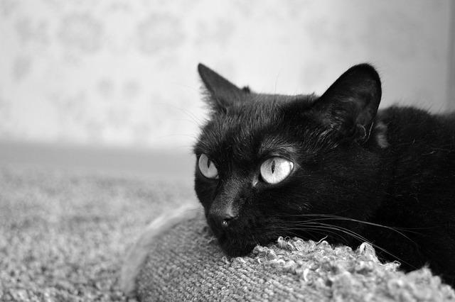 Black cat scratching posts pet, animals.