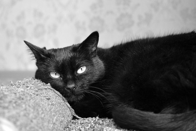 Black cat scratching posts views, animals.