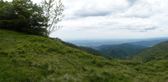Black forest hill rhine valley.
