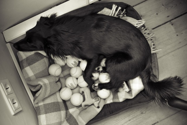 Black white dog, animals.