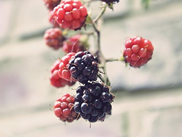 Blackberries bramble bush, food drink.