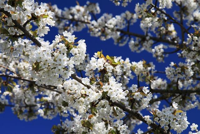 Bloom blossom blue, nature landscapes.