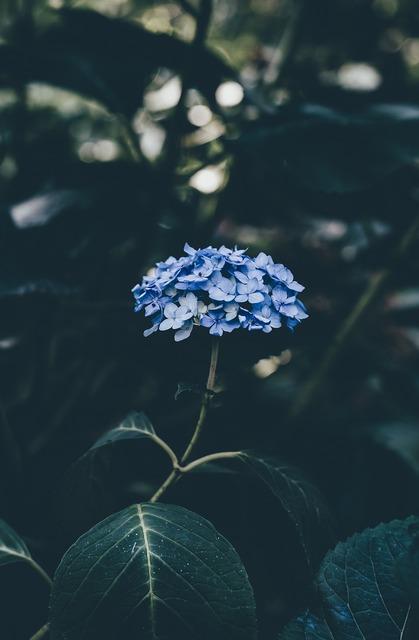Bloom blossom flora, nature landscapes.