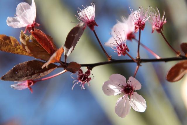 Blossom bloom white blossom, nature landscapes.