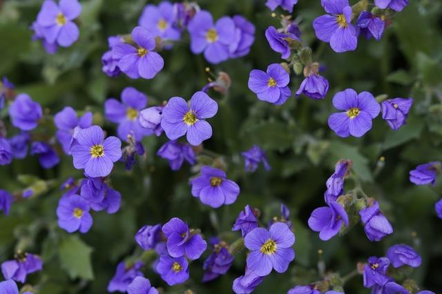 Blue pillow flowers purple, backgrounds textures.