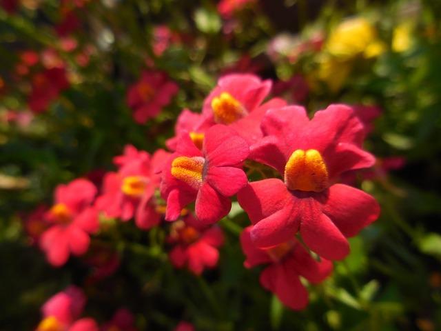 Blütenmeer flowers red.