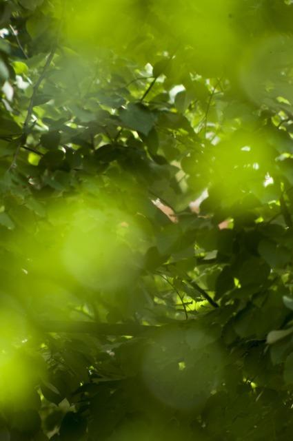 Bokeh green nature, nature landscapes.