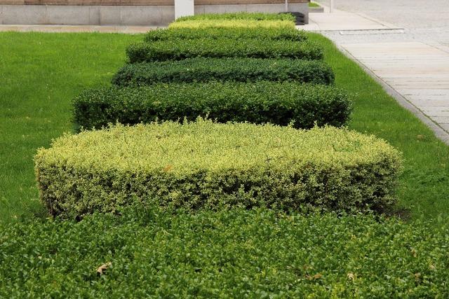 Book hedge green.