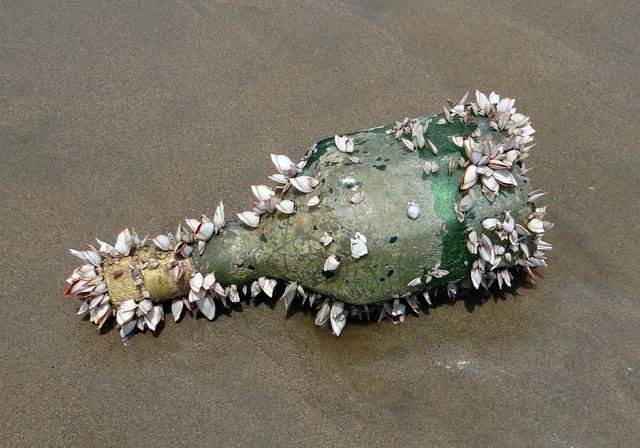 Bottle shells marine organisms.