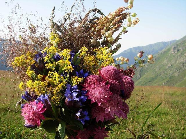 Bouquet bouquet of flowers bunch of flowers, nature landscapes.