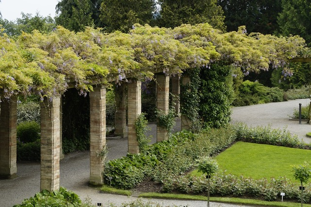 Bower portico wisteria, nature landscapes.