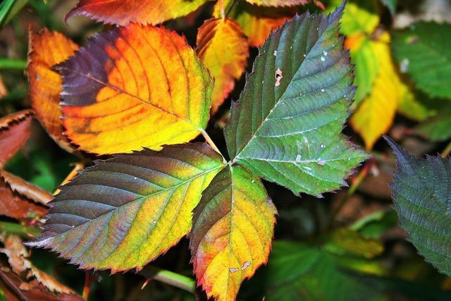 Bramble leaves serrated, nature landscapes.