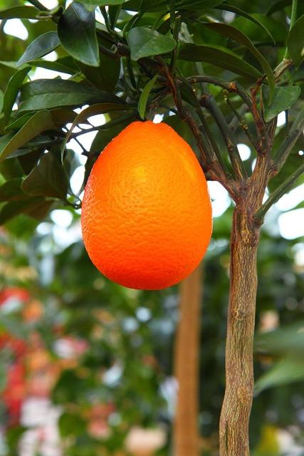Branch citrus delicious, food drink.