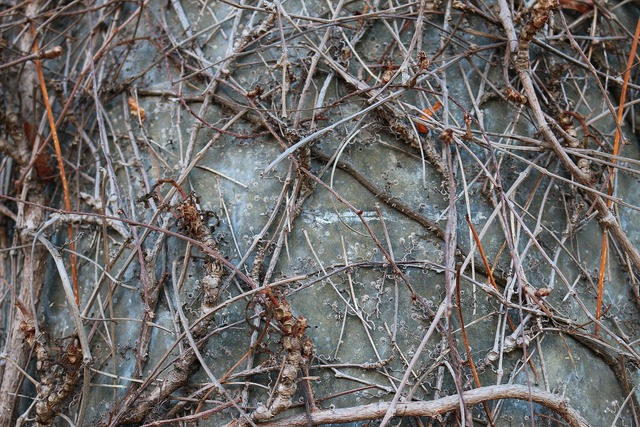 Branches braid aesthetic, nature landscapes.