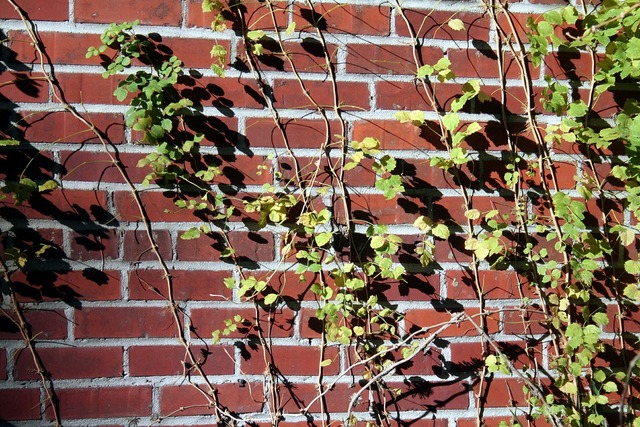 Brick wall vines, architecture buildings.