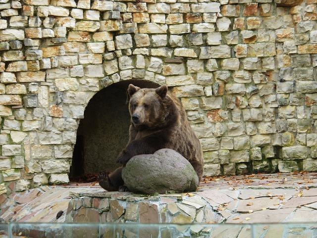 Brown bear predator sit, animals.