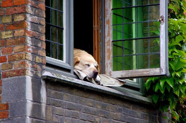 Bruges dog home, animals.