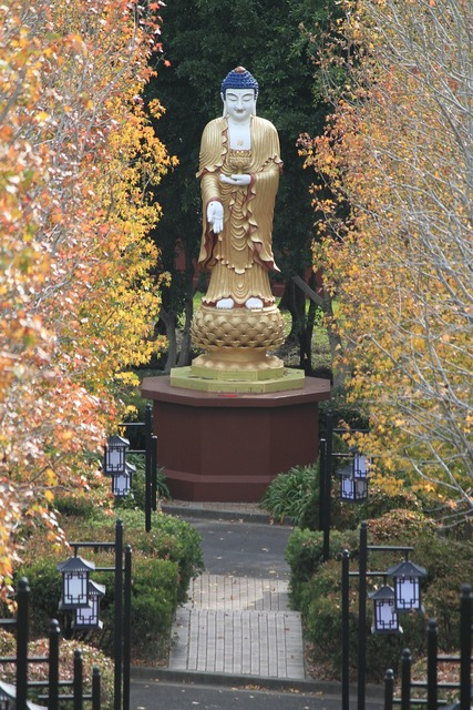 Buddha monk buddhism, religion.