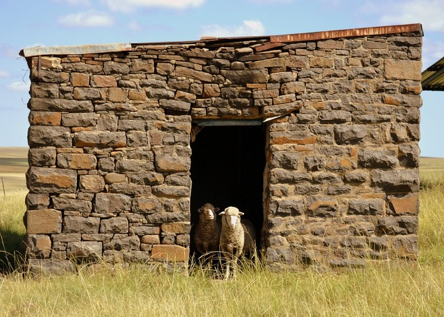 Building sheep countryside, architecture buildings.