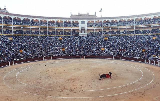 Bullfight torero corrida.