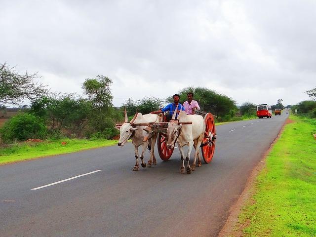 Bullock cart karnataka india, transportation traffic.