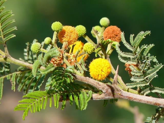 Bush plant blossom, nature landscapes.