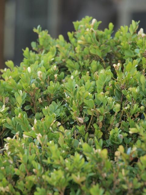 Bush plant leaves, nature landscapes.