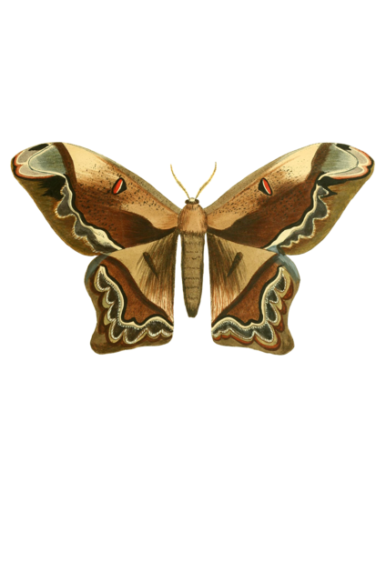 Butterfly animal insect, animals.